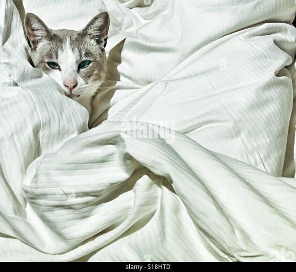 Luxury Cat - Stock-Bilder
