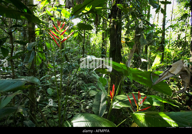 Amazon jungle Peru - Stock-Bilder