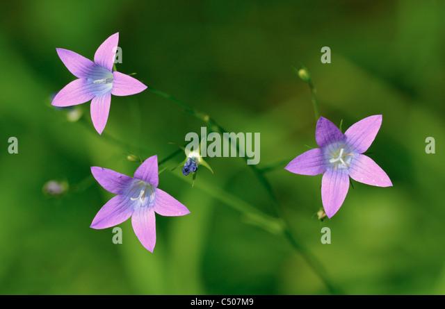 Field flowers - Stock Image