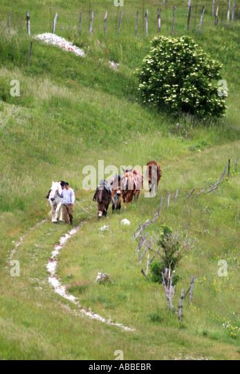 mule trekking on the Piano Grande near Castelluccio in the Sibillini National Park,Le Marche,the Marches,Umbria,Italy - Stock Image