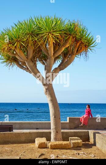 Dracaena Draco, Tenerife, Canary Islands, Spain - Stock Image