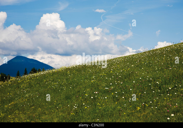 Germany, Bavaria, Meadow and wild flowers with Karwendel mountains in background - Stock-Bilder