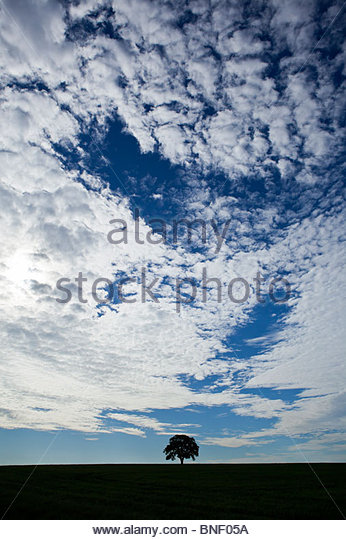 Solitary tree growing in a farm field in Ontario Canada - Stock Image