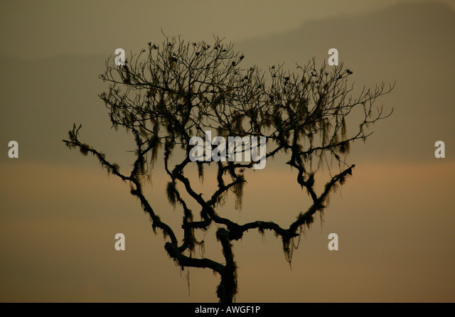 Tree and misty landscapes at Cerro Pirre in Darien national park, Darien province, Republic of Panama. - Stock-Bilder