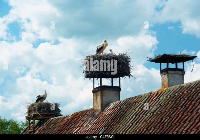 storks nest on roof stock photos   storks nest on roof nexton homes nexton homes summerville sc