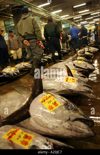 Fresh tuna lies awaiting inspection and auction at Tsukiji fish market, the worlds largest daily fish market, Tokyo, - Stock Image