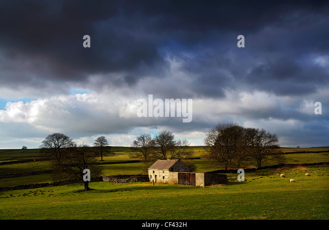 Sheep grazing by a remote farmhouse, now used as a barn, close to the small village of Flagg in the western Peak - Stock Image