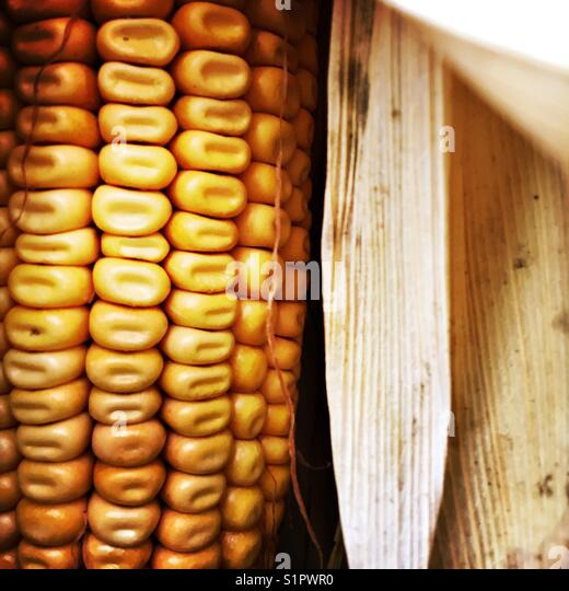 Drier corn - Stock Image