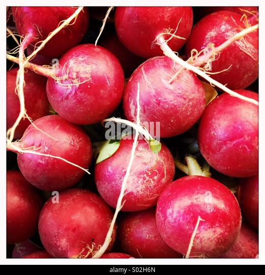 Radishes - Stock Image