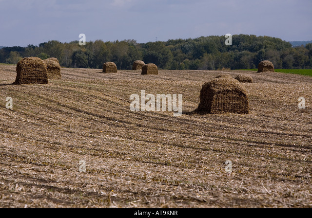 Chopped cornstalks formed into bails in a field near Madison Wisconsin - Stock Image