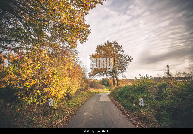 Trees in autumn colors by a nature trail in a countryside landscape scenery in the fall in beautiful autumn colors - Stock Image