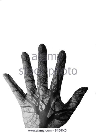 Hand/tree double exposure - Stock-Bilder