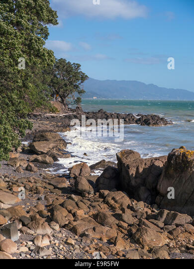 New Zealand coastline near Amodeo Bay, Coromandel Peninsular, north island New Zealand - Stock Image