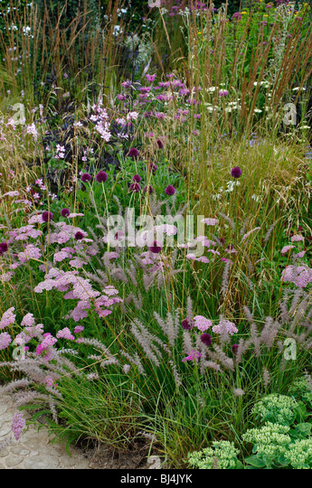 A natural planted wild flower border Achillea, Alliums and grasses - Stock Image