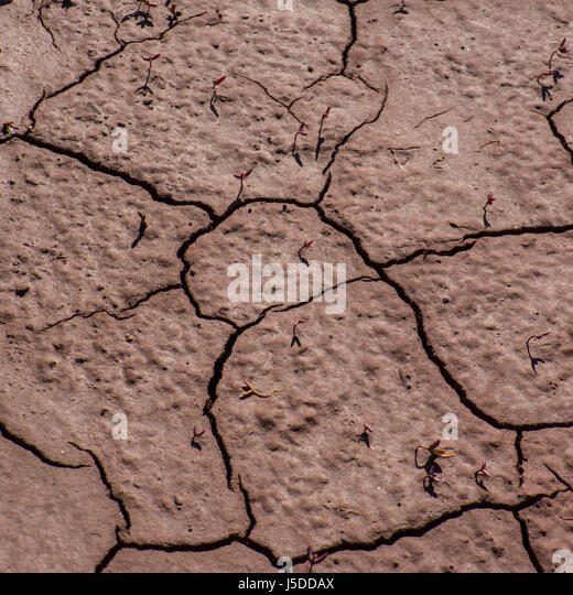 Fractured soil in the area of industrial water discharge - Stock Image