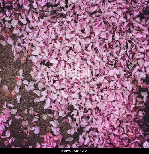 Street covered with petals - Stock Image
