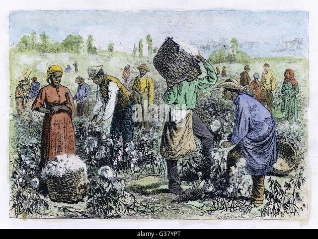 southern cotton and slave industry Bellum us south, where he suggests that the us south switched away from   boom along with india, and its cotton production and exports.