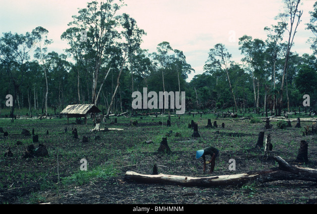 Javanese farmers in a transmigration site, West Papua - Stock Image