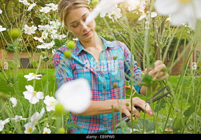 Woman Cutting Flowers in Garden - Stock Image