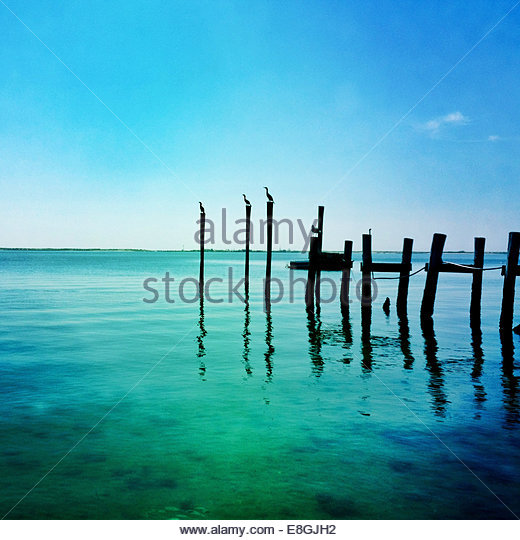 Birds sitting on broken jetty - Stock Image