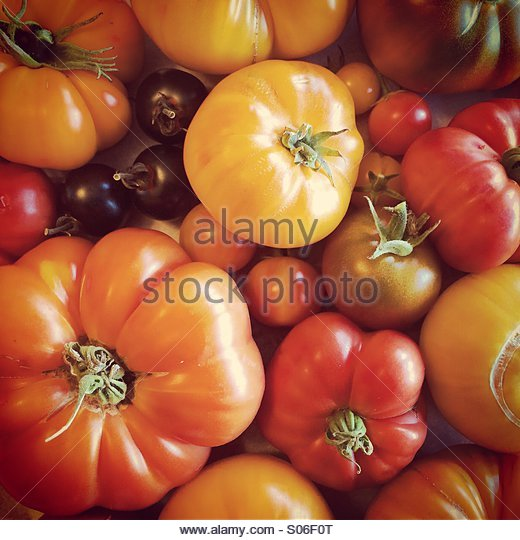 Heirloom Tomato Harvest - Stock Image