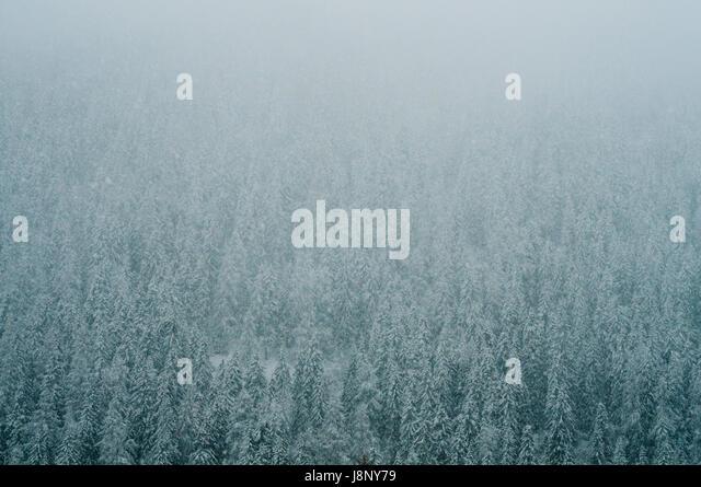 Coniferous forest in winter - Stock-Bilder