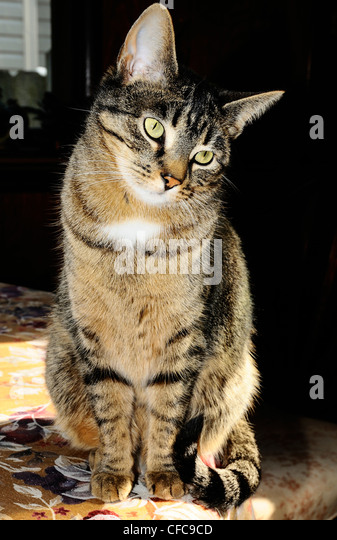 buprenorphine side effects in cats