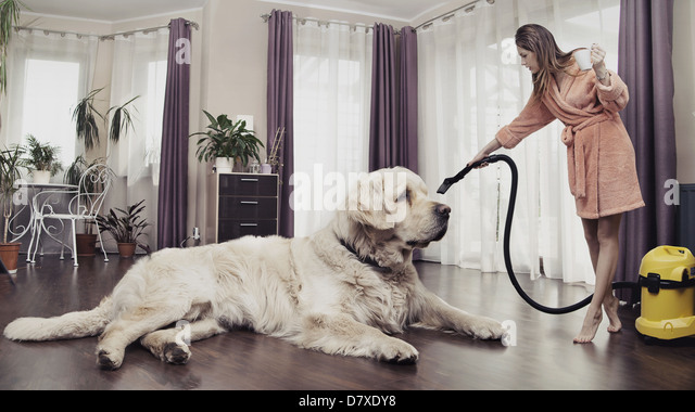 Young woman cleaning big cute dog - Stock Image
