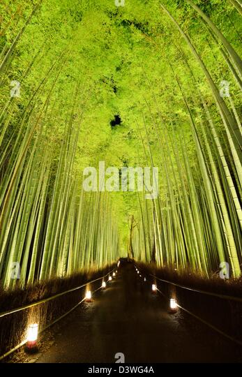 The bamboo forest of Kyoto, Japan. - Stock-Bilder