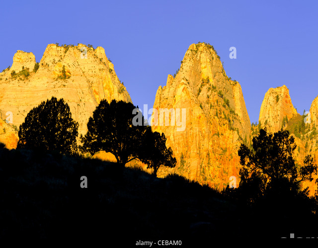 Silhouetted trees and Temple and Towers of the Virgin. Zion National Park, Utah - Stock Image