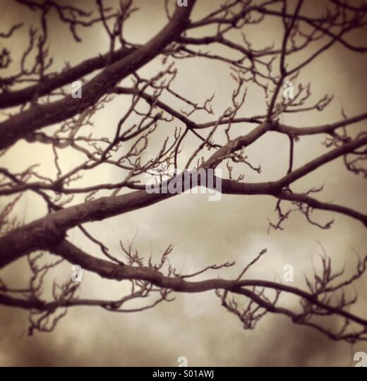 Tree branches - Stock Image