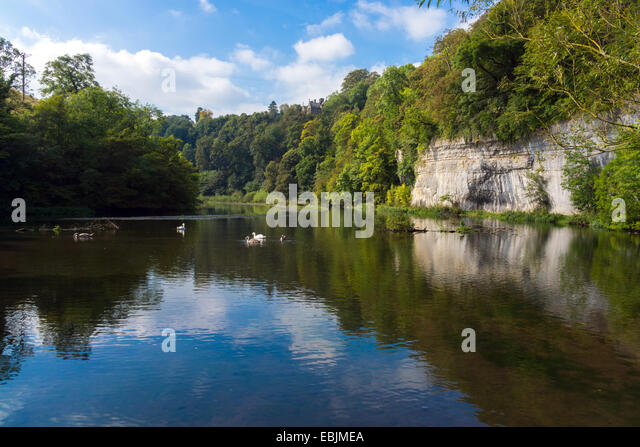Swans and cygnets with reflections in lake old mill pond, Water-cum-Jolly, - Stock Image