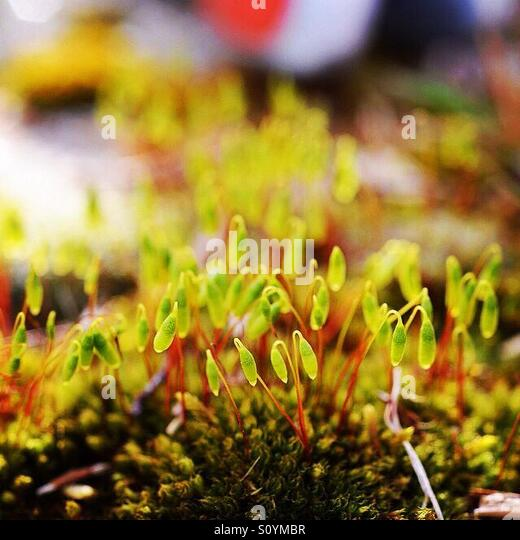 Moss on a wall - Stock Image