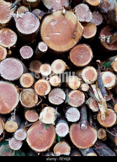 Full Frame Shot Of Logs - Stock Image