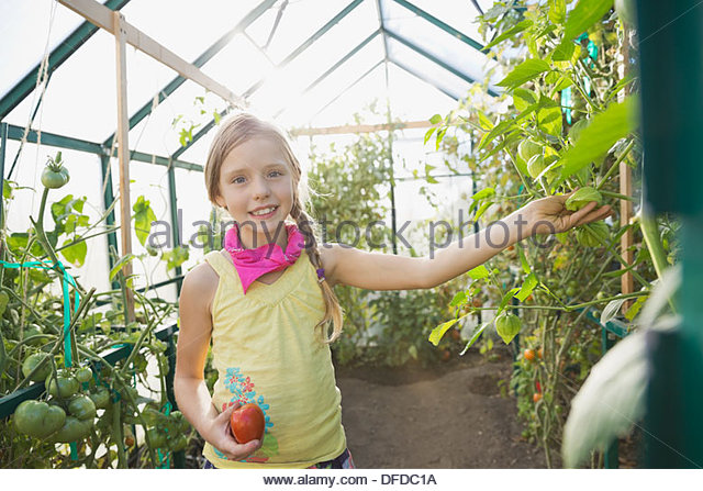 Portrait of cute girl holding fresh tomato in greenhouse - Stock Image