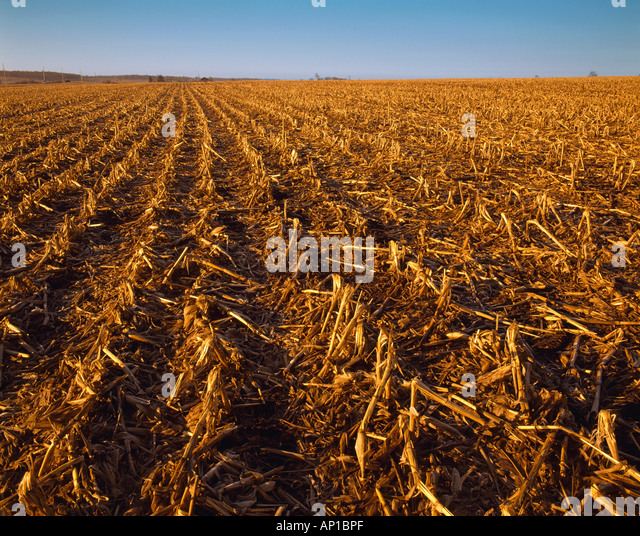 Clinker Picture Of Corn : Residue stock photos images alamy