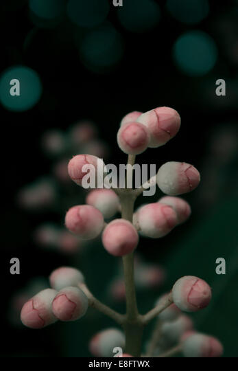 View of plant - Stock Image