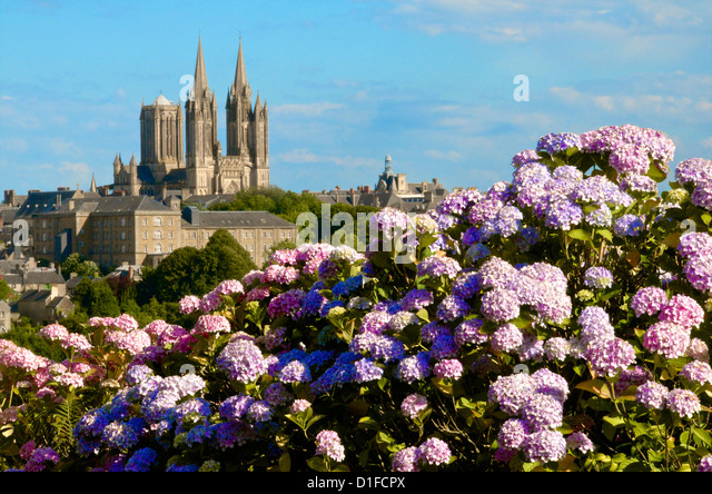 Panorama with hydrangeas and Notre Dame cathedral on the skyline of the town of Coutances, Cotentin, Normandy, France - Stock Image