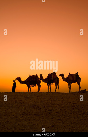 Camels near the Pyramids at Giza, Cairo, Egypt - Stock Image