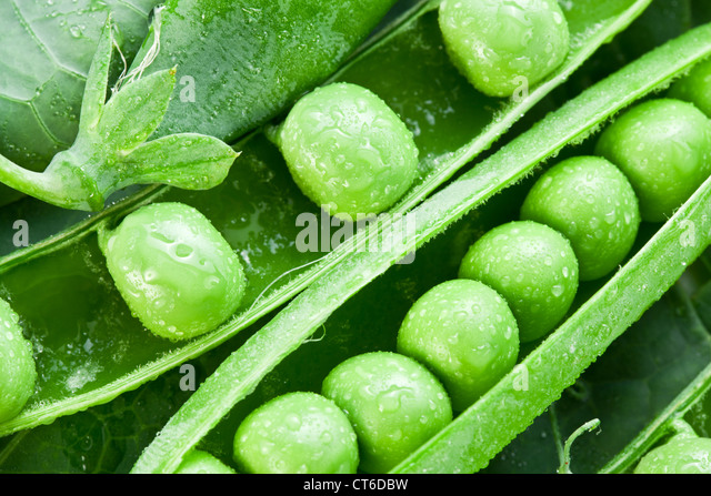 Pods of green peas on a background of leaves. - Stock Image