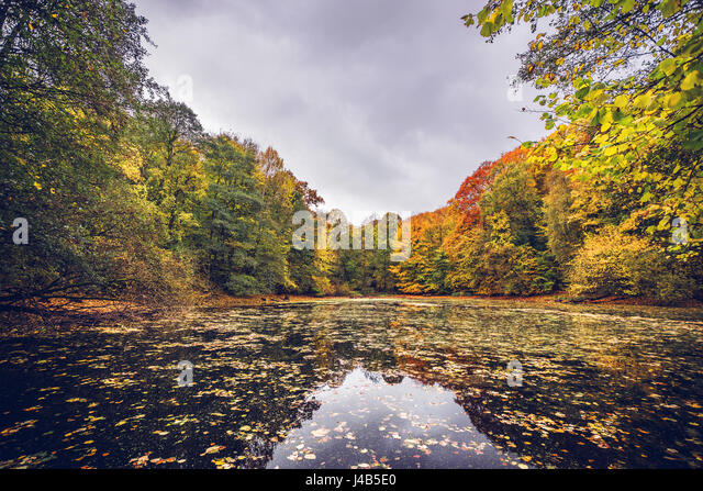Lake covered with autumn leaves near a forest in beutiful autumn colors in the fall with fallen leaves on the water - Stock Image