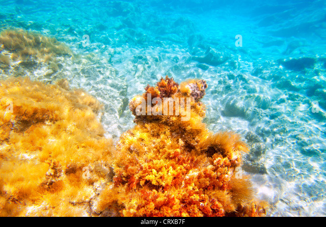 Baearic islands underwater sea bottom snorkeling view - Stock Image