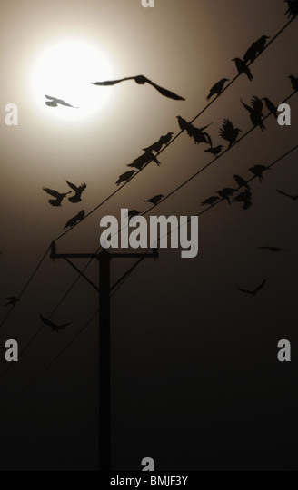 Birds on electric cable - Stock Image
