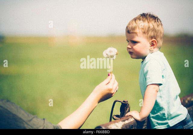 Parent holding a dandelion to be blown by child - Stock Image