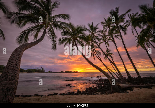 Sunset and coconut palm trees at Makalawena Beach, Kekaha Kai State Park, Kona-Kohala Coast, Big Island of Hawaii. - Stock Image