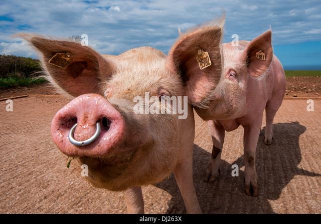 Hog Rings