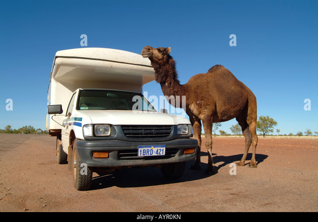 Campingbus stock photos campingbus stock images alamy for Camel motors on park and ajo