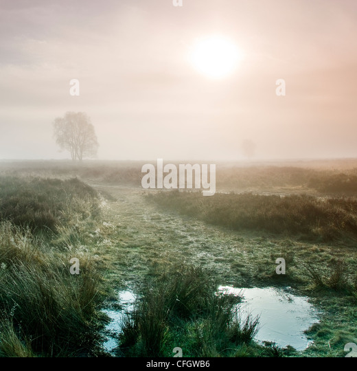 Sunrise Morning Mist on Cannock Chase AONB (area of outstanding natural beauty) in Staffordshire Midlands England - Stock Image