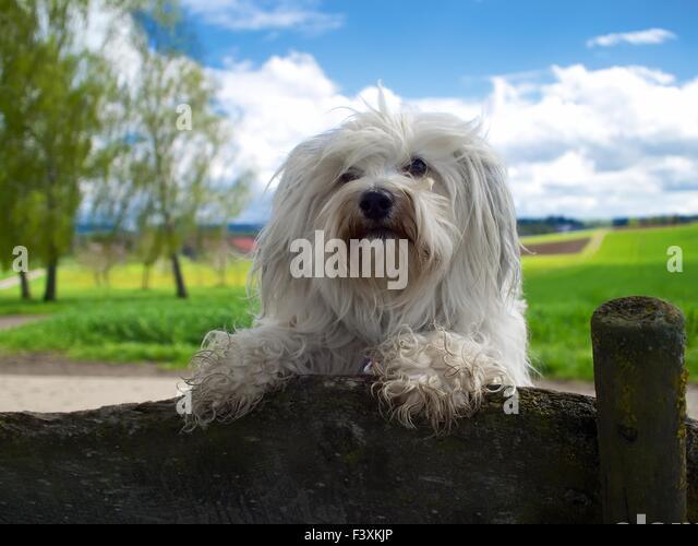 Cool Dog - Stock-Bilder