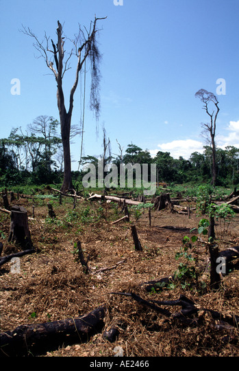 Deforestation, Ivory Coast - Stock Image